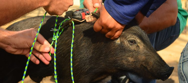 Field Experience & Internships what's a pig worth?