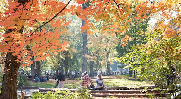 Fall foliage in a park